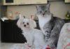 Kot apeluje: pomóżcie nam znaleźć Maltę