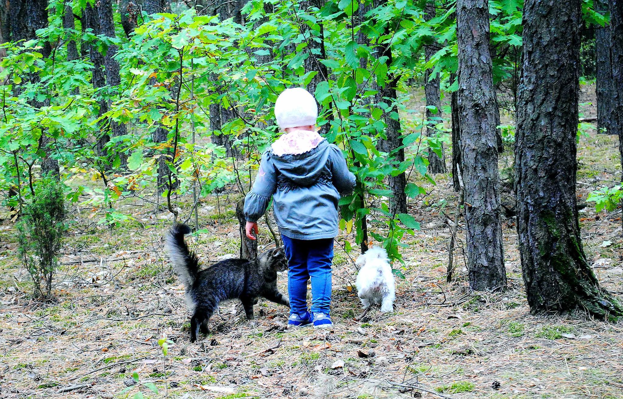Kot, psy, i dziecięta